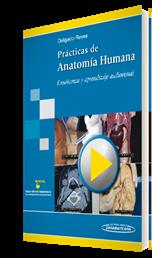 Delgado. Prácticas de anatomía humana