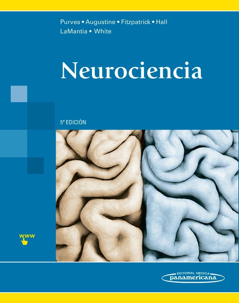neurocincia bsica anatomia e fisiologia