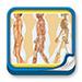 Formación - Evaluación clínica funcional del movimiento corporal humano