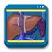 Libro de Diagnóstico por Imagen